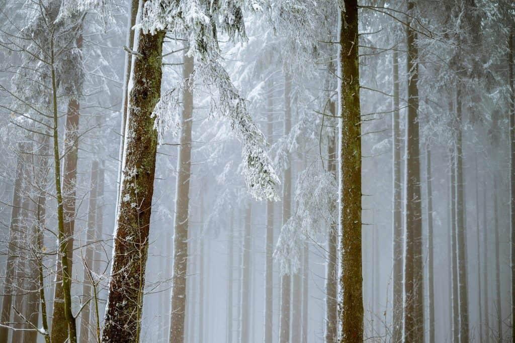 BEstia ze wschodu przynosi atak zimy