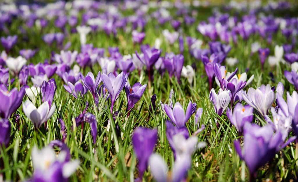 Pogoda na niedzielę. Wiosna w Polsce