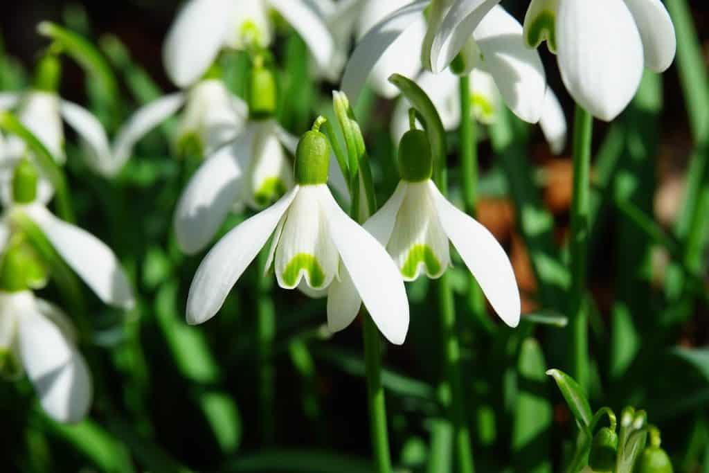 Wiosna w górach w Polsce. Padły rekordy ciepła