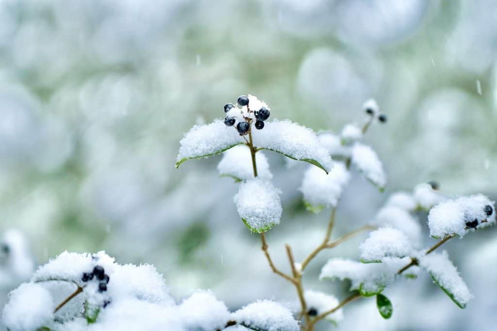 Śnieżyca na południu kraju